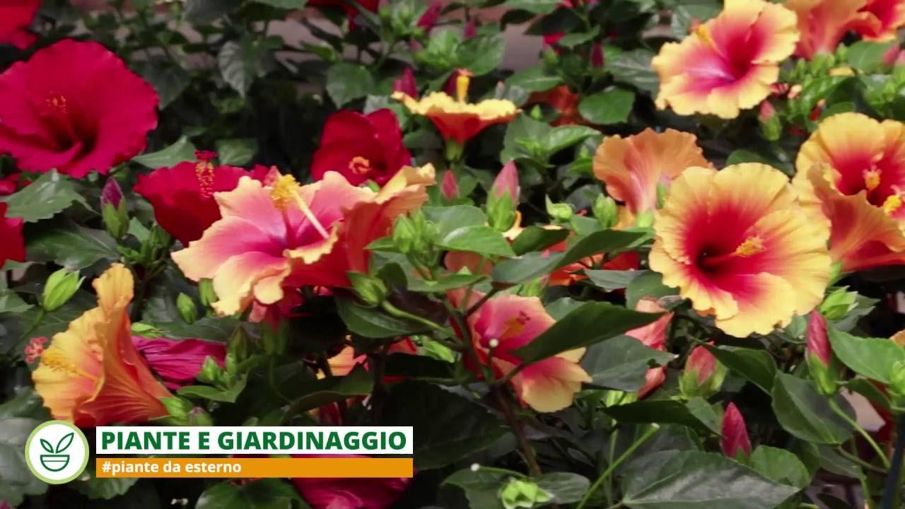 Greenhouse le piante da esterno youtube for Piante da esterno