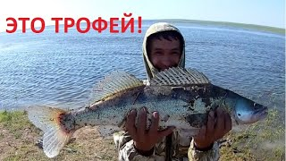 О такой рыбалке мечтают все. Бешеный клев судака на Нуре.