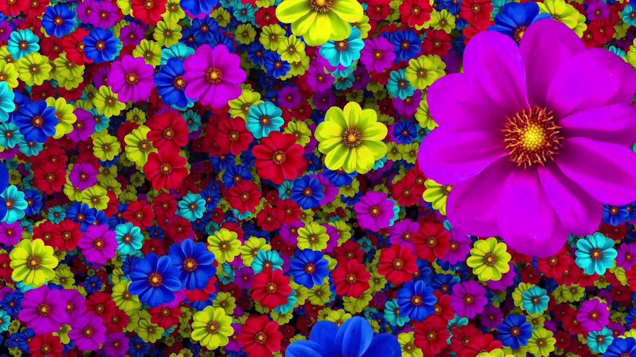 Colorful Flowers Background HD Video 1080p - YouTube