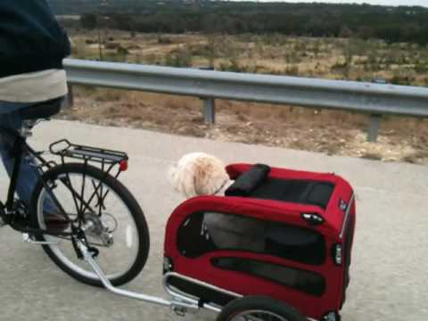 goldendoodle in solvit dog bike trailer youtube. Black Bedroom Furniture Sets. Home Design Ideas