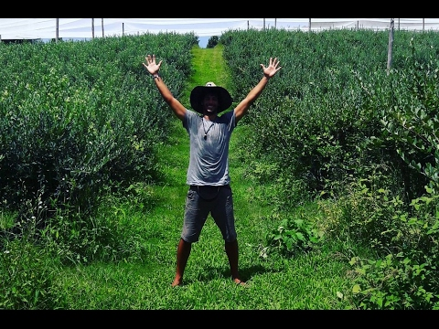 My First Working Day in a Farm (Vlog #73)