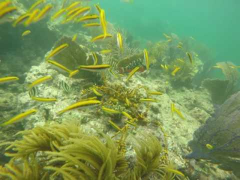 Sombrero Reef