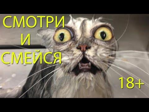 УБОЙНАЯ ПОДБОРКА! СМЕХ ДО СЛЁЗ! 18+