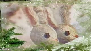 Ёлочка ёлка лесной аромат Новогодняя сказка