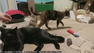 猫達が住む猫専用部屋のライブ映像です】猫部屋には他に3台のライブカメ...
