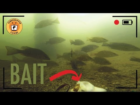 How Many Fish Actually See Your Bait?