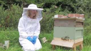 Natural Beekeeping - How to Inspect Your Bees Without Opening the Hive