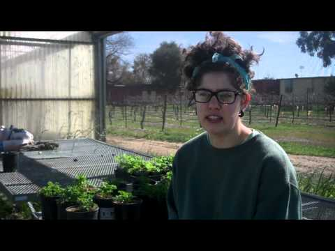 Explore the UC Davis Student Farm
