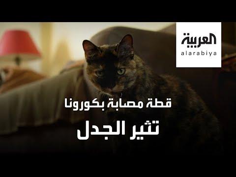 قطة تصاب بكورونا وثير الجدل في فرنسا  - نشر قبل 2 ساعة