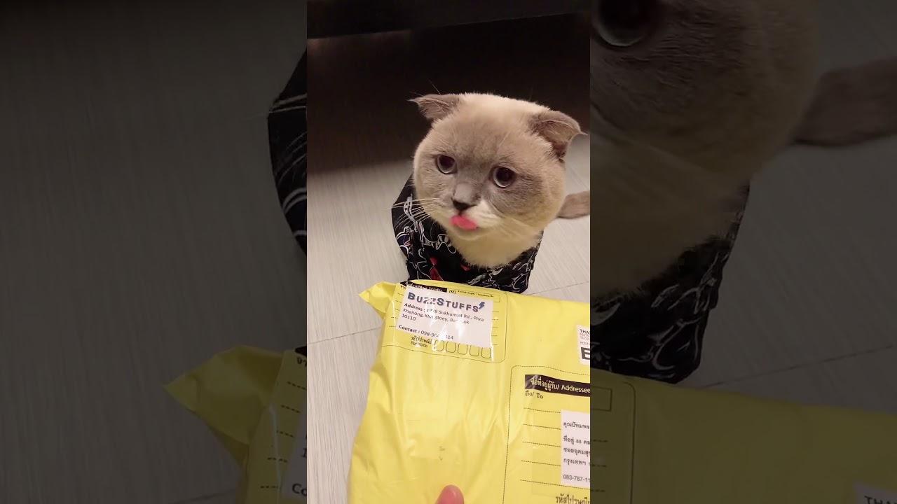 ชิเอลช้อปของออนไลน์ + มีของแจก | ชิเอลแมวมึน