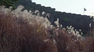 [official Teaser] #리케이댄스_화성춤 #…