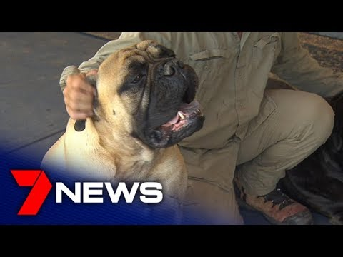 Adelaide veteran reunited with beloved service dog 'Brian' | Adelaide | 7NEWS