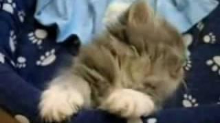 Кошачьи Приколы | Приколы с Кошками.