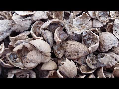 Применение скорлупы грецких орехов
