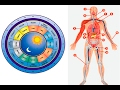 Find Out Which Organ In Your Body Does Not Work Well With The Chinese Clock