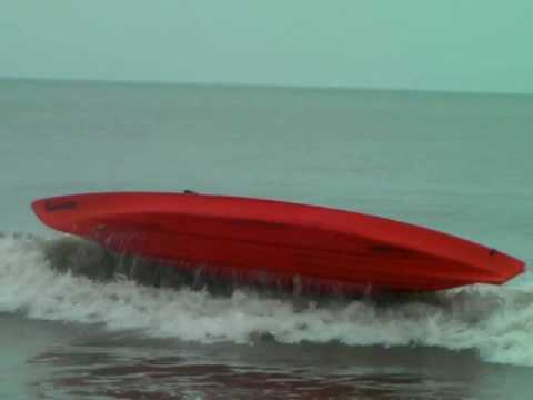 Dolphin Tour Crashes Kayak Nature Tours Virginia Beach Va