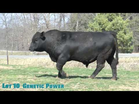 Lot 10  Genetic Power