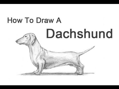 How to Draw a Dog (Dachshund)