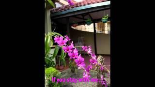 Maggie MacNeal   -   When You're Gone  ( audio - lyrics )