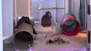 BudgetBunny: Why You Should Spay Or Neuter Your Rabbit