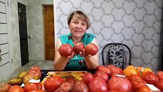 Сорта томатов в разрезе 2020 года . Часть 2. Нижегородская об. Северный регион.