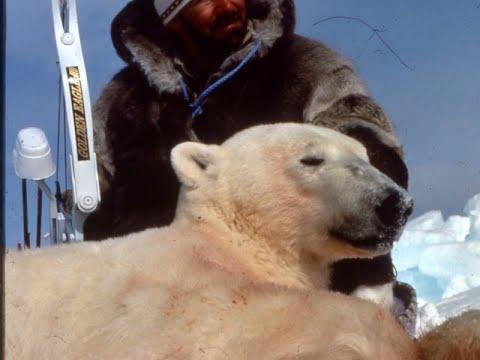 Polar Bear Bowhunt In Northwest Territories