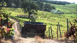 Vinhos de Trás-os-Montes