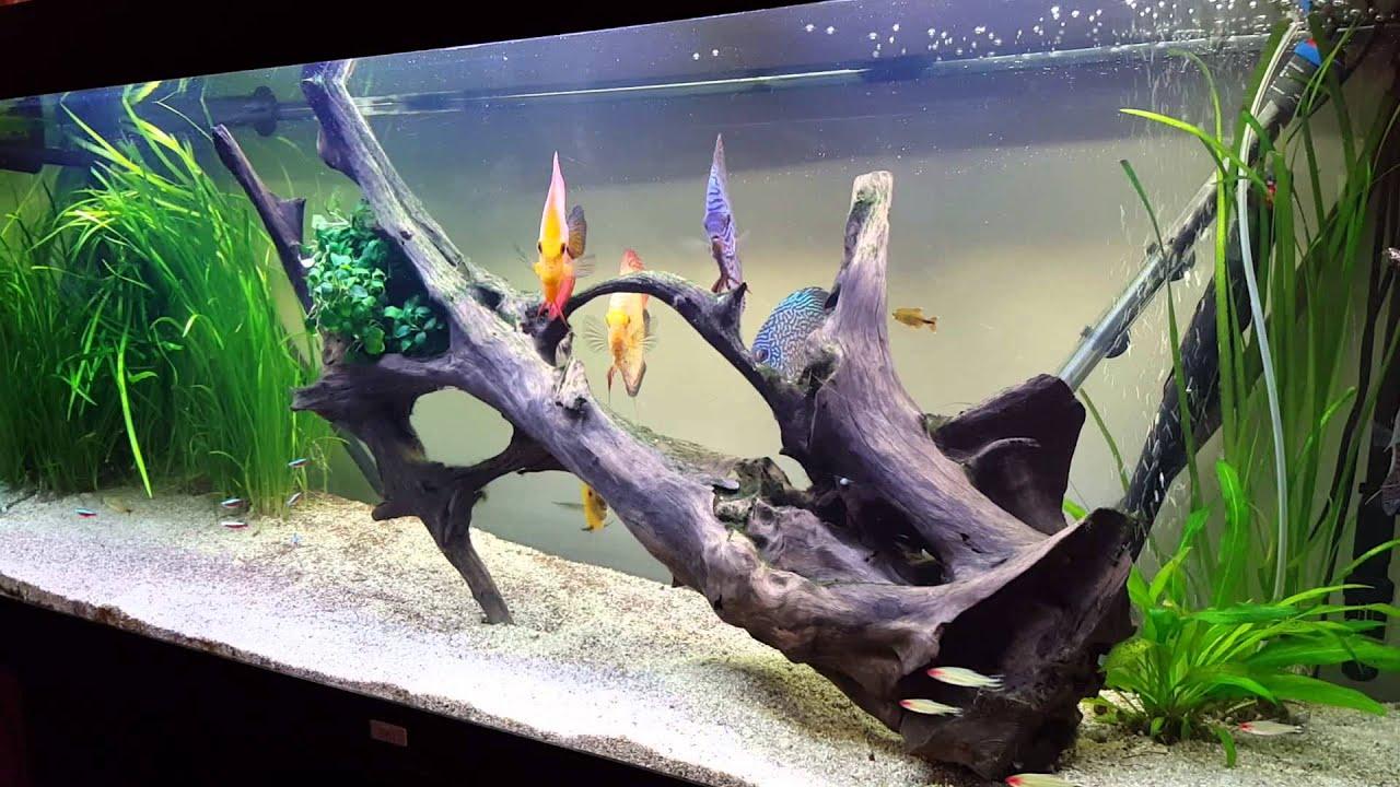aquarium 7 discus 15 18 cms 450 litres youtube. Black Bedroom Furniture Sets. Home Design Ideas