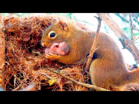 Wiewiórka Uczepiła Się Mężczyzny, Prosząc O Pomoc. Jej Dziecko Miało Kłopoty!