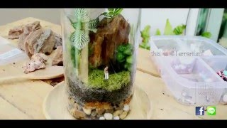 Terrarium สวนขวด : Little World Gardens