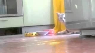 У кота приватный обед, смешные коты