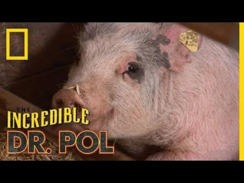 The Incredibly Busy Doctors Brenda and Emily | The Incredible Dr. Pol  | National Geographic Wild