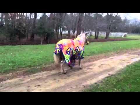 Lilly pony bright new blanket stormy trot