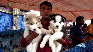 RECENT DOG PUPPY PRICE AT GALIFF STREET PET MARKET KOLKATA   CUTE DOG PUPPY   13TH DEC 2020 VISIT