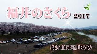福井市足羽川堤防 旅サラダでラッシャーが紹介.