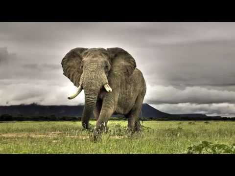 African Relaxing Music for Stress Relief #1♥♪☼♫