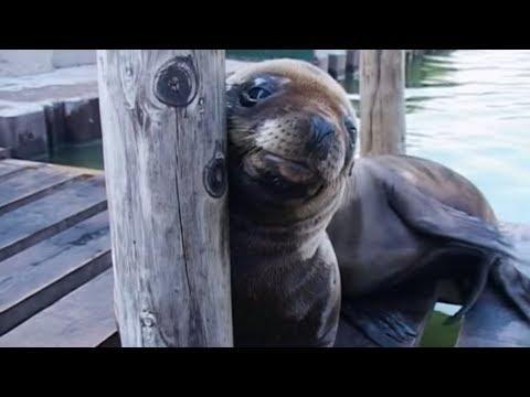 Animal Park - Sedating Sea Lions | Safari Park Documentary | Natural History Channel