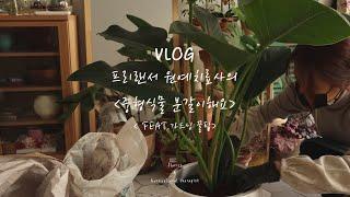 [vlog] 오픈식물│개업화분보내기│중형식물 분갈이하고…