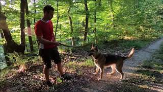 Best Funny Dogs With His Owner || Funny Animals || Funny Dogs | Dogs-Cats|| Funny  Moment of Dogs
