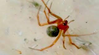 Aranha planta e de roxa vermelha