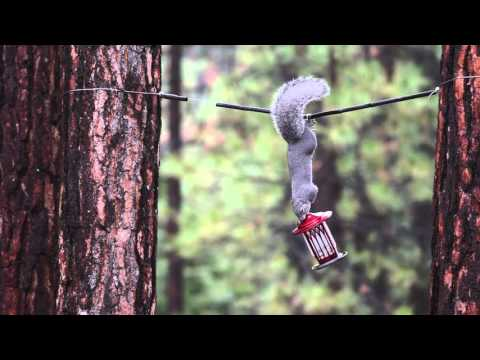Squirrel Wars Electric Fence Bird Feeder Doovi