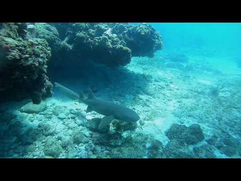 swimming-with-nurse-sharks-at-alligator-reef-light-house-in-islamorada-florida