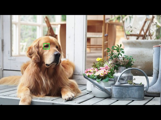 Sony's popular A7 III camera now tracks your pet's eyes