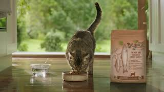 Purina® Beyond® high quality cat food made with selected natural ingredients