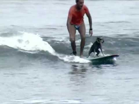 Misha: The Longboard Surfing Dog