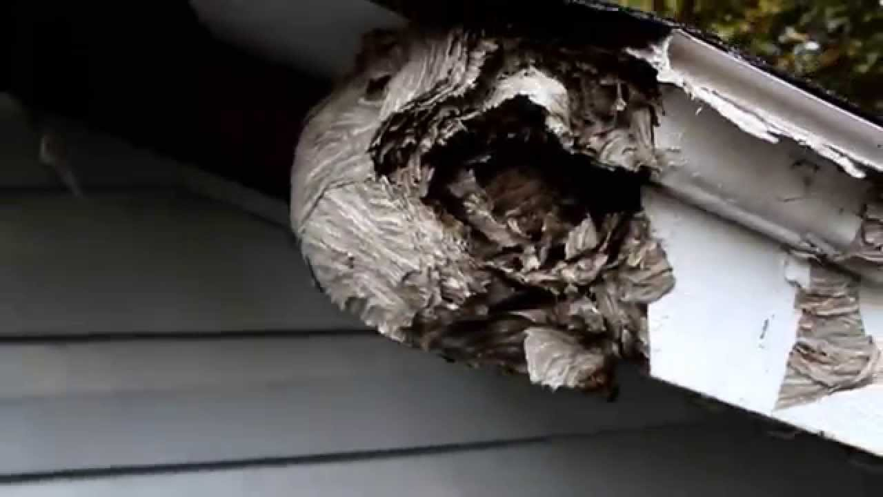 how to keep wasps out of soffit
