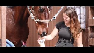 USED HORSE COMMERCIAL