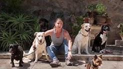 Seminare Hundetrainer