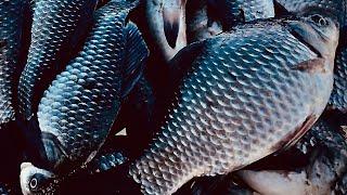 Накосил Карася на ПОПЛАВОЧКУ Рыбалка на карася на поплавок Рыбалка на карася зимой