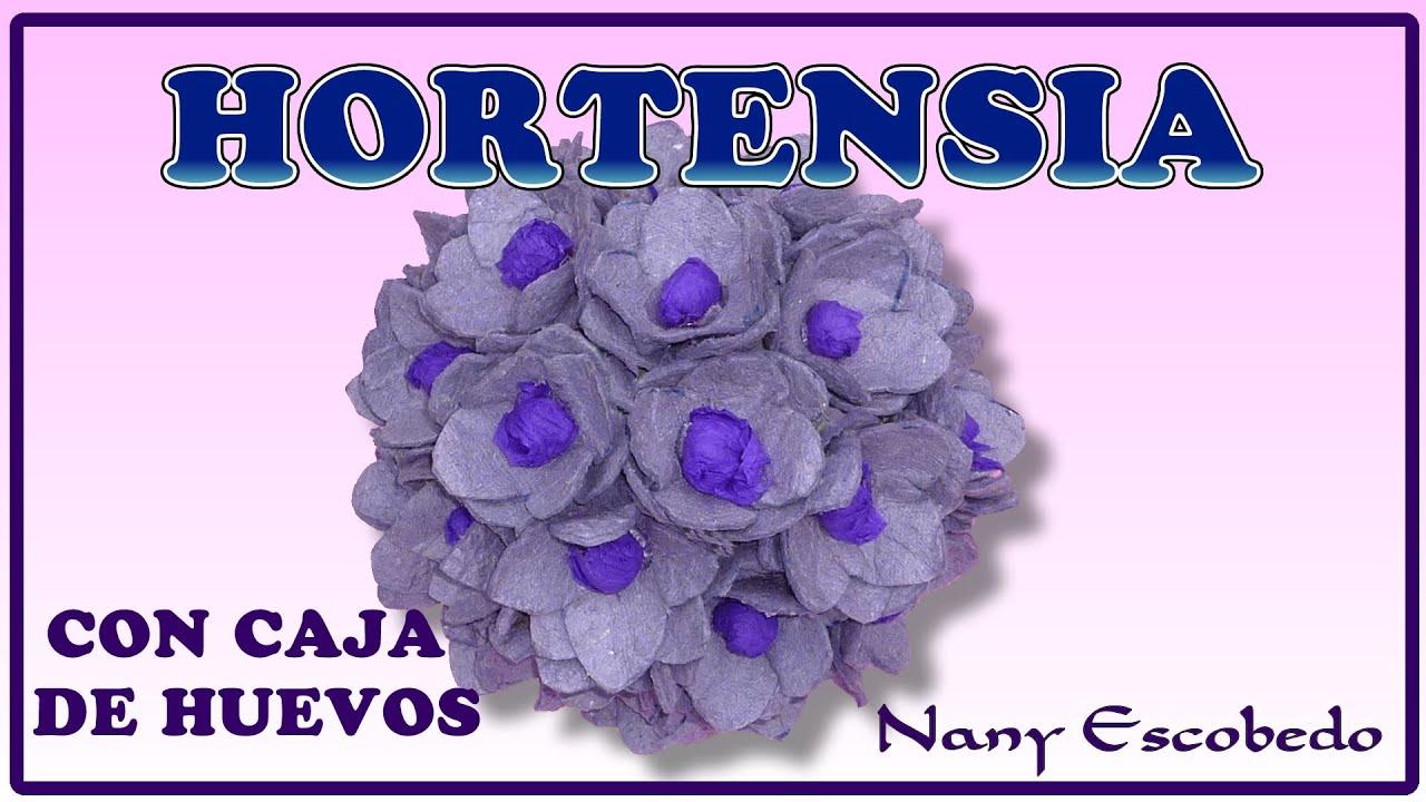 Hortensia con caja de huevos youtube - Caja de huevo ...